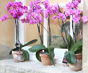 The Oxfordhsire Pantry Orchids